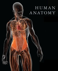 Humans-anatomy